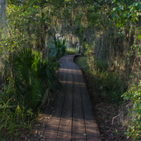 Barataria Boardwalk